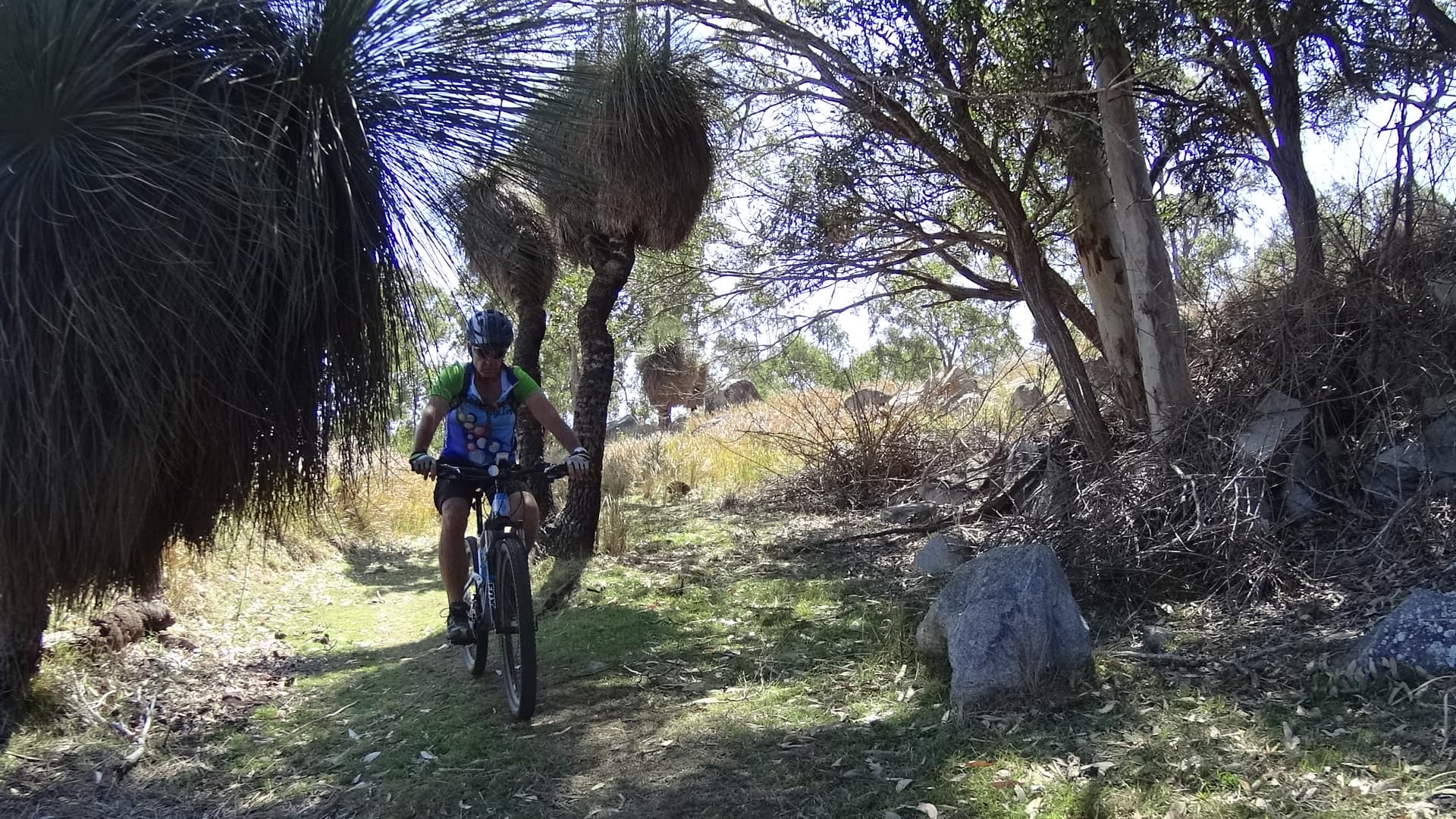 Grass trees on th BVRT
